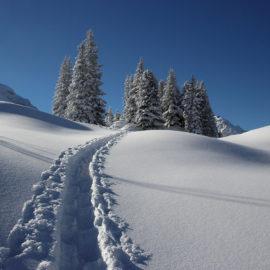 Schneearten Ratgber