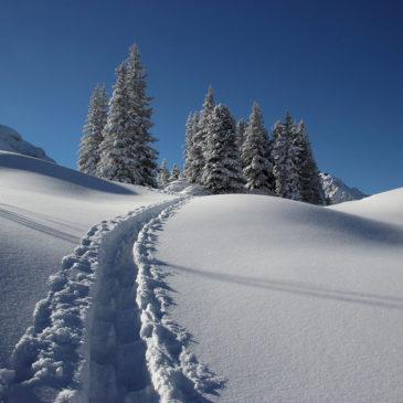 Welche Schneearten gibt es?